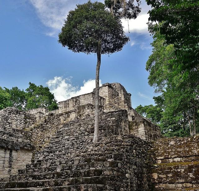 MEXICO, Mayastätte Calakmul, inmitten eines unendlich scheinenden Dschungels. verborgen, versteckt im tiefen Urwald , 19765/12692