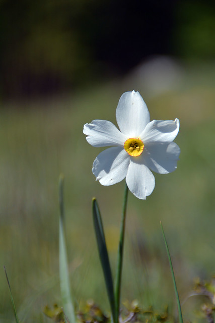 Narciso del poeta