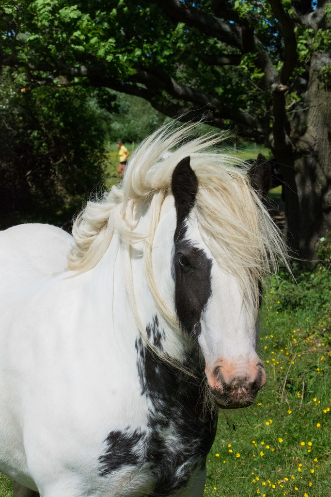 Horses in Hutton Country Park