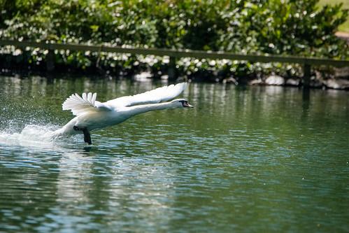 #lockdown - swan landing