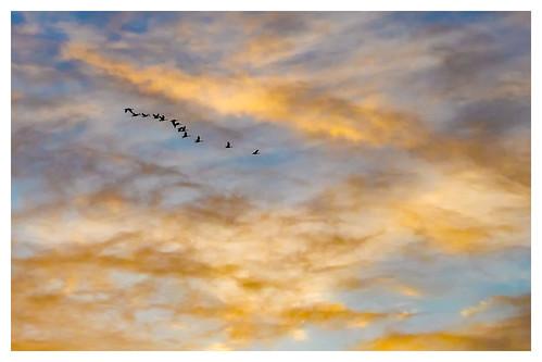 sunset geese birds flying birdsinflight canadageese badgermountain richlandwa