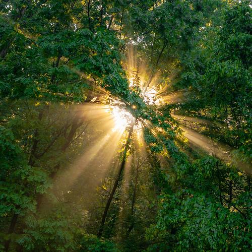 sunrise forest sunshine raysofsunshine sunburst trees leaves nature outdoors sun golden goldenhour sony sonya7riii sonyalpha sonyimages tamron1722mm tamronlens tamron maryland annearundelcounty woodland