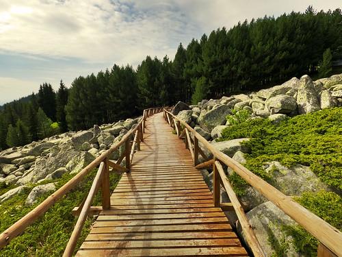 vitosha mountain trail forest path way view landscape hike hiking