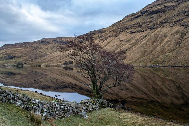 Lone Tree, Loch Leitreach.