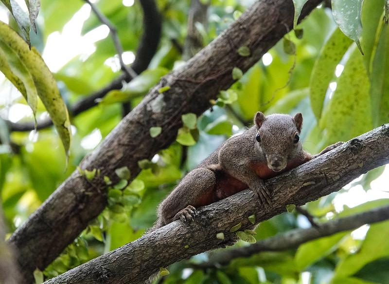 A strange squirrel