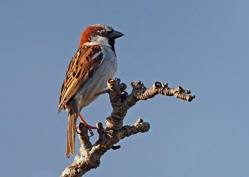 bird house sparrow nature countryside wildlife sunset loughborough spring may