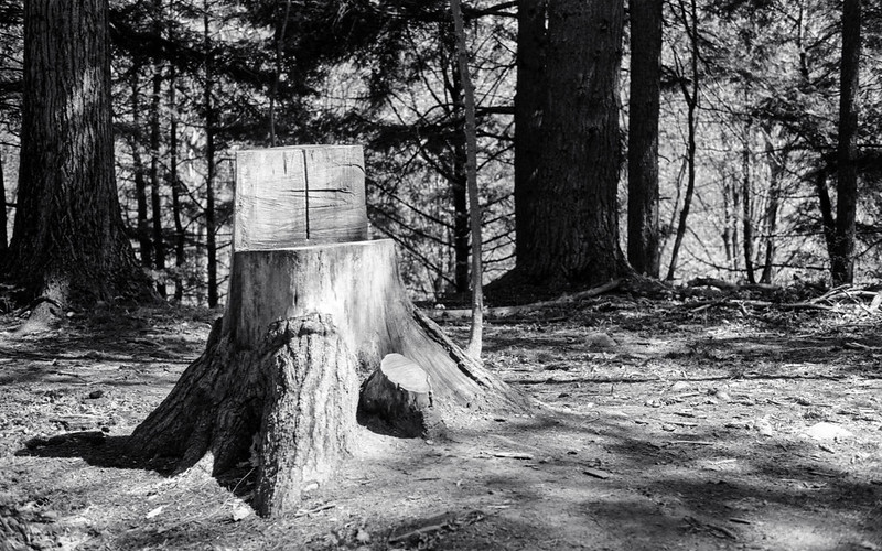 Dual Level Stump