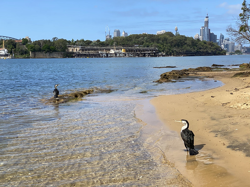 Cormorants on Balls Head Bay