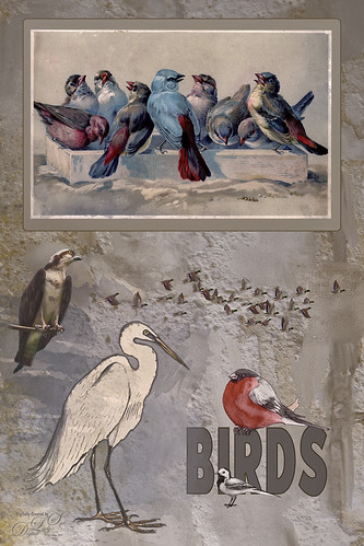 Image of template of birds