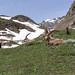 Parco Nazionale del Gran Paradiso Stambecchi Alpine Ibex Bouquetins-0309
