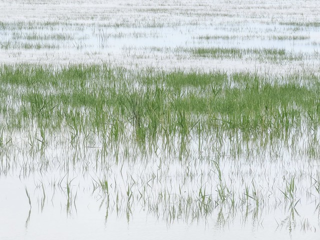 Wetland Grass on a Cloudy Day