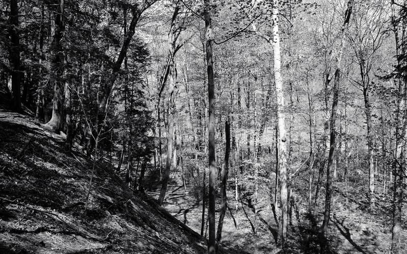 Looking Down the Bronte Creek Valley