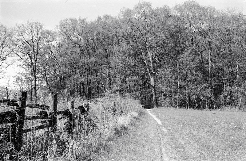 Path to the Woodlot
