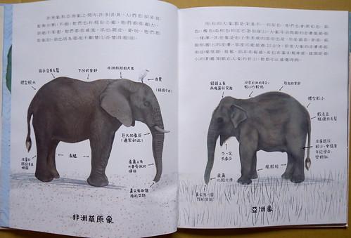 20200526-大象2 拷貝