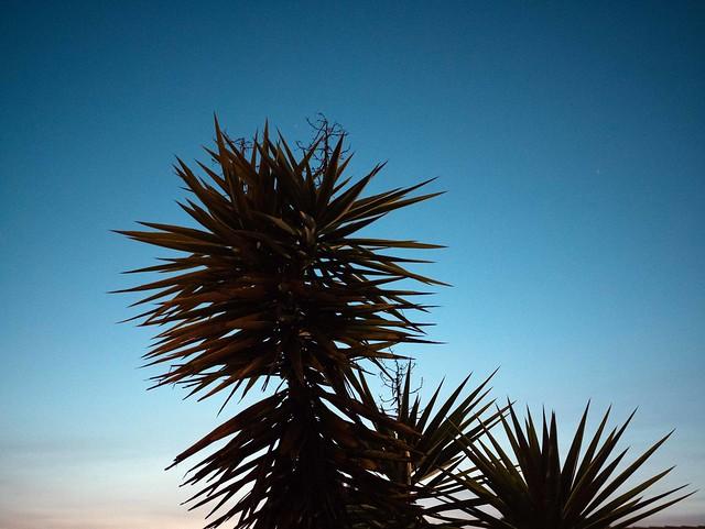 A l'ombre du Yucca