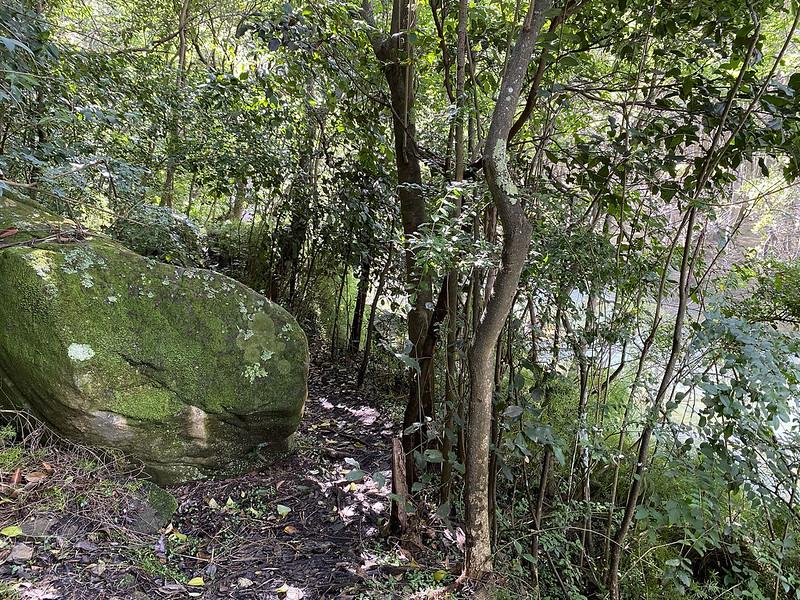 Berrys Creek track