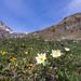 Parco Nazionale del Gran Paradiso -0332