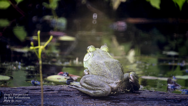 Frog's Perspective