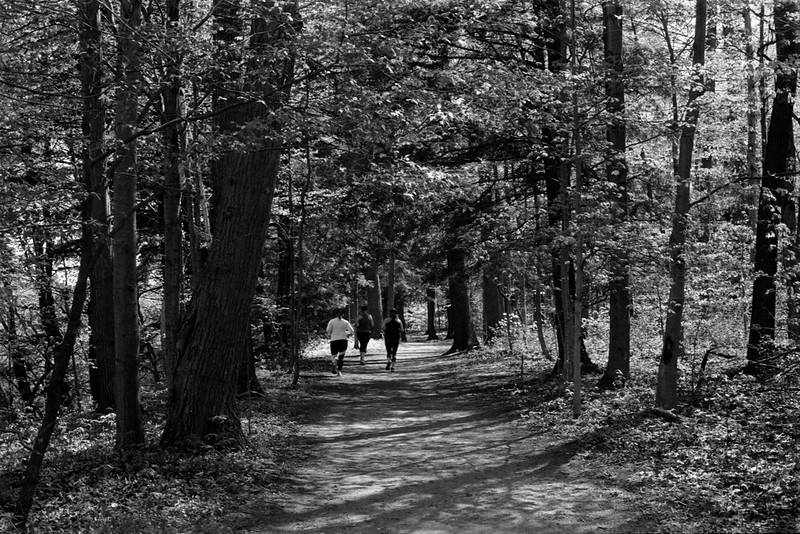 Jogging Through the Woods_