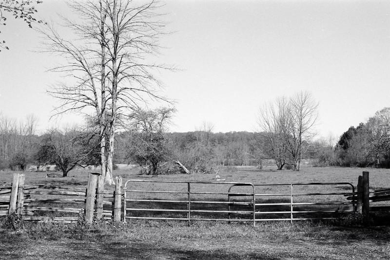 Bronte Park Field