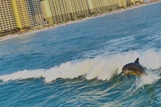 Dolphin 🐬