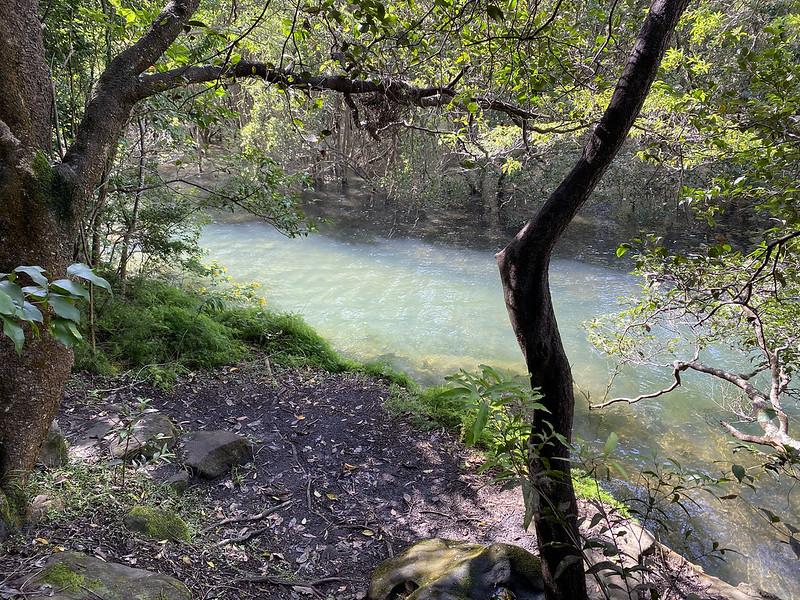 Gore Cove mangrove swamp
