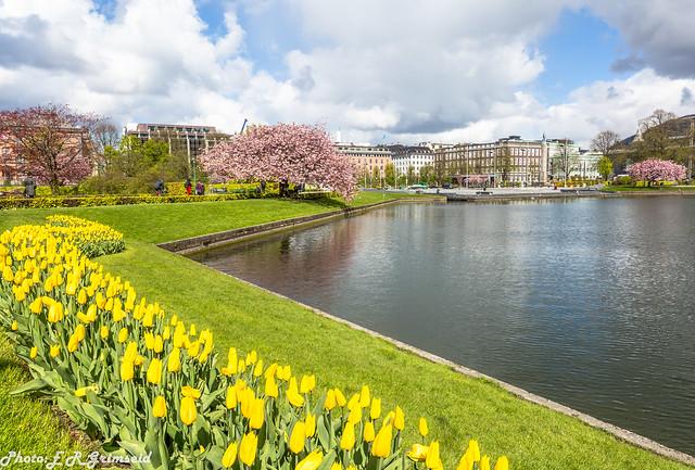 Bergen ( 2 )