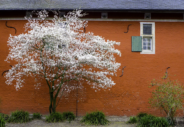 Rheydt Blossom