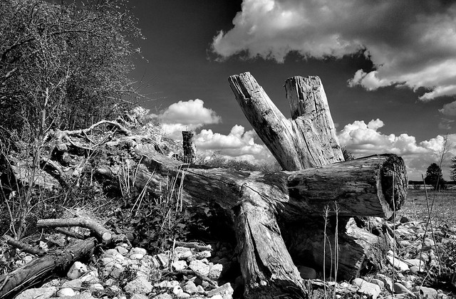 Munich - Dead Trees