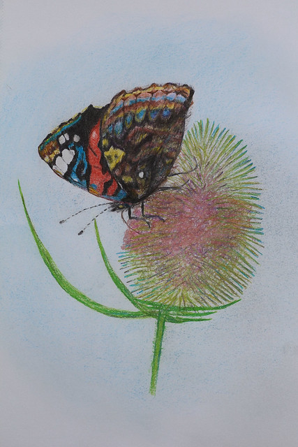 Butterfly and teasel fower drawing