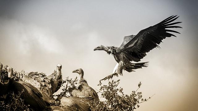 Oiseaux de mort
