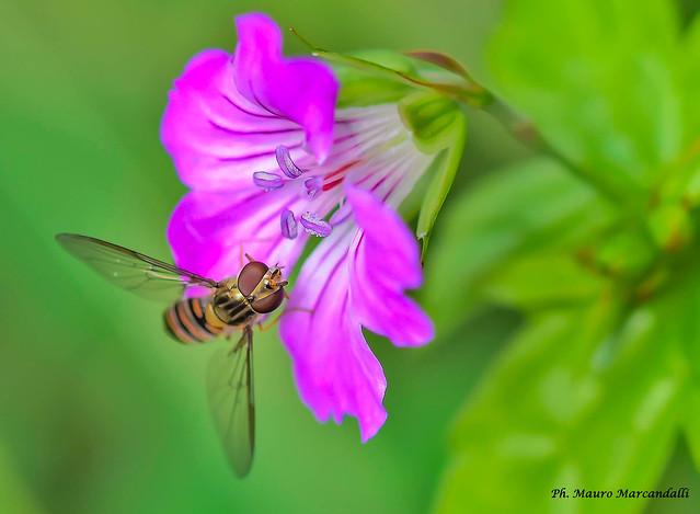 Flora e fauna del fiume Adda