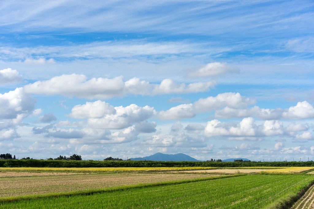 秋空に広がる積雲(わた雲)