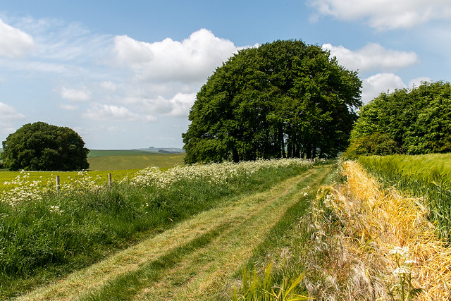 Convergence on a Wiltshire Byway