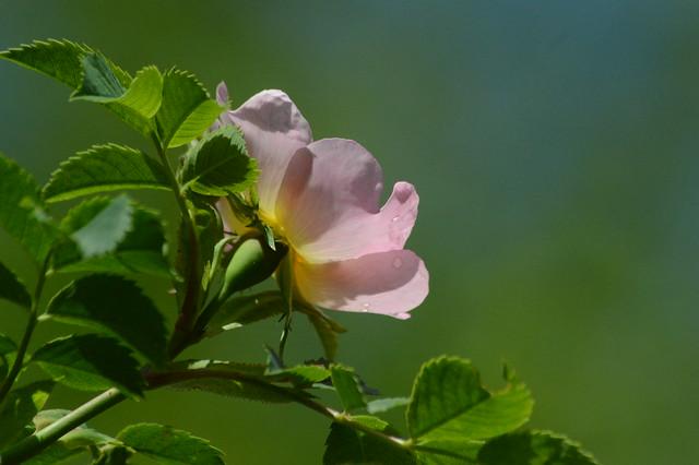 DSC_0334 Mai-Blüten
