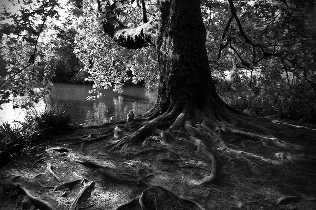 Roots, lake and seagull