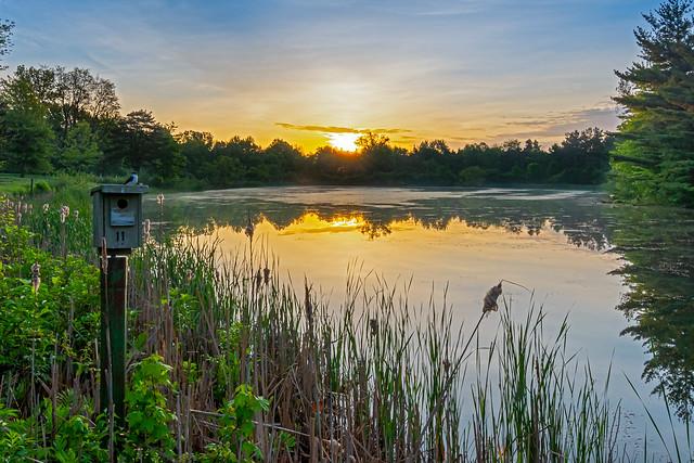 Lonely Bird Sunrise.jpg