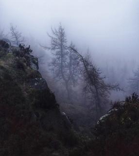 Roaches Mist