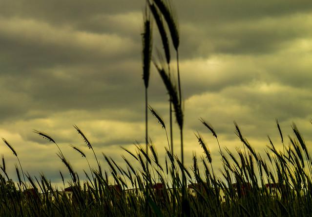 am Feldrand, # sky