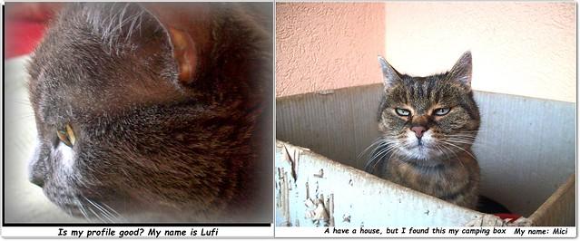 2 cats. I remember...