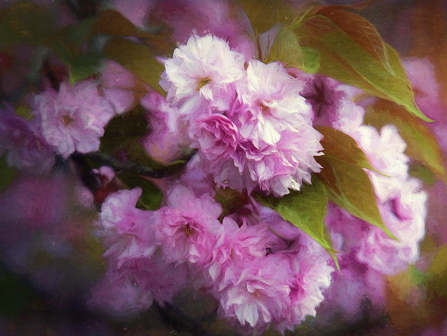 Painterly Cherry Blossoms.