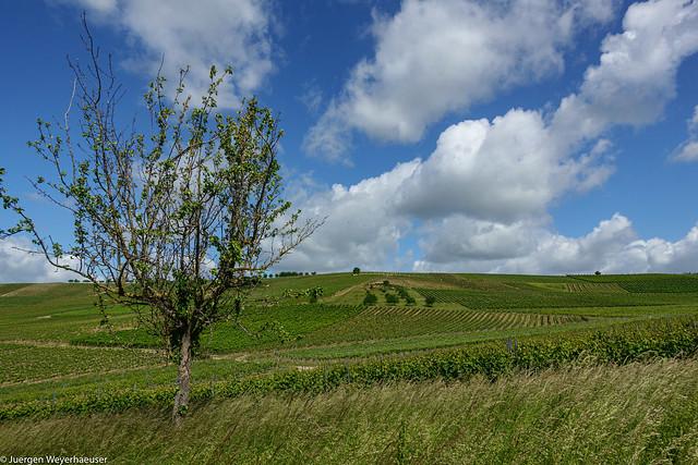 Hiwweltour Zornheimer Berg - durch die Weinberge