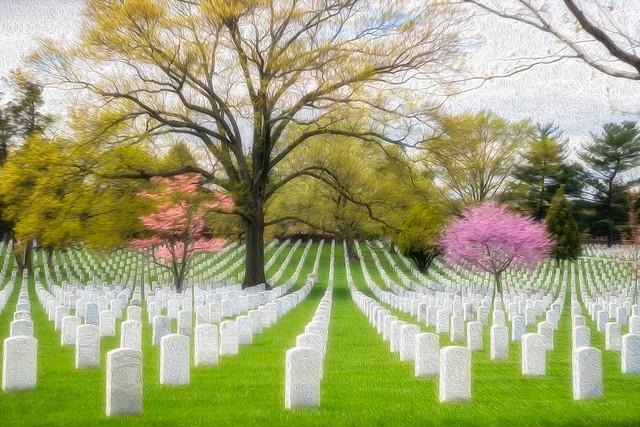 Memorial Day Tribute