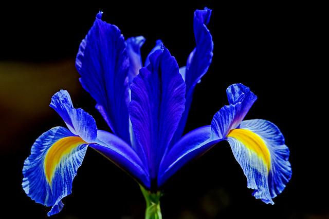 Lilac Flower (3) Panasonic DC-S1 & Lumix 70-200mm F4 Telephoto Zoom