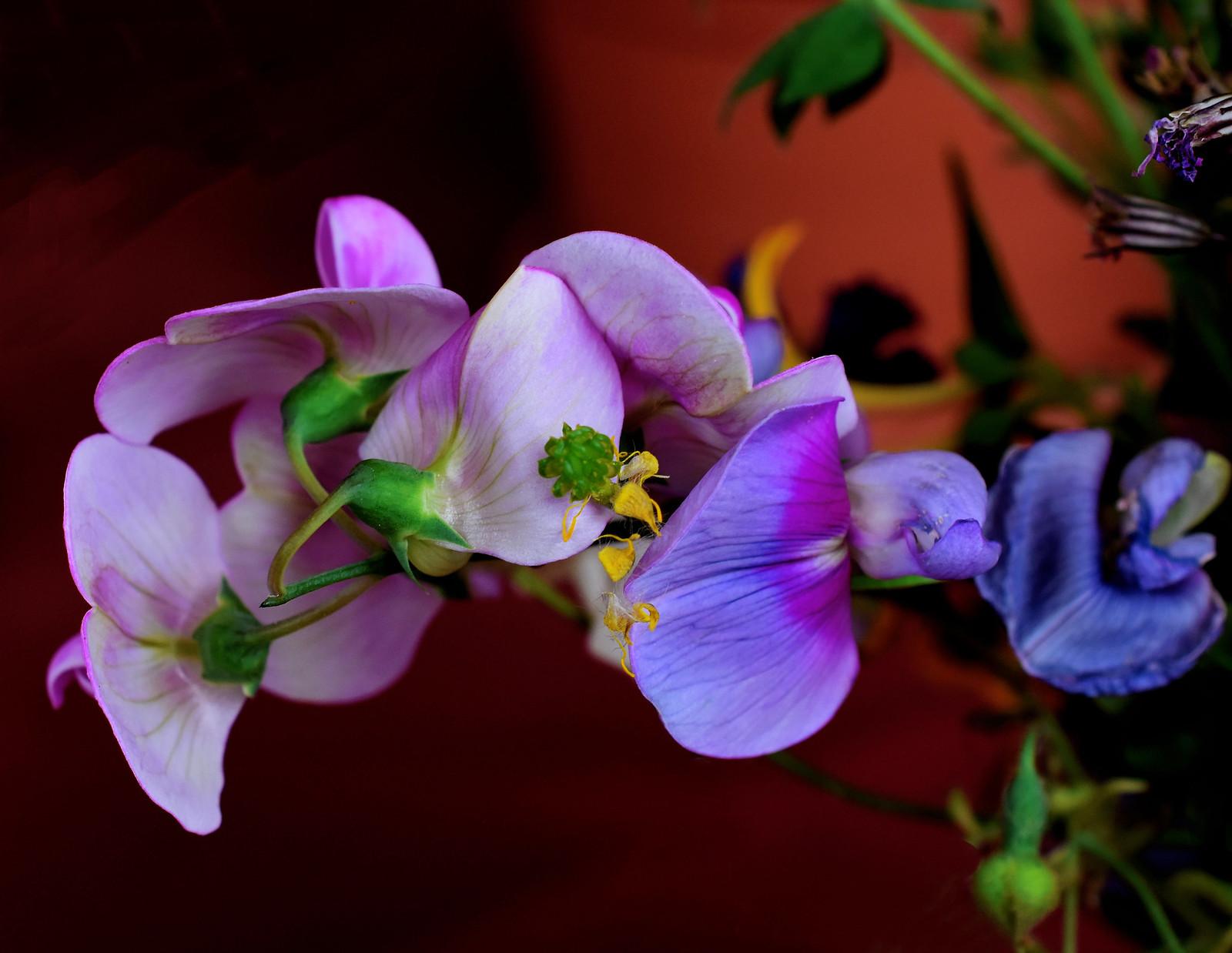 Floretes de bosc ......