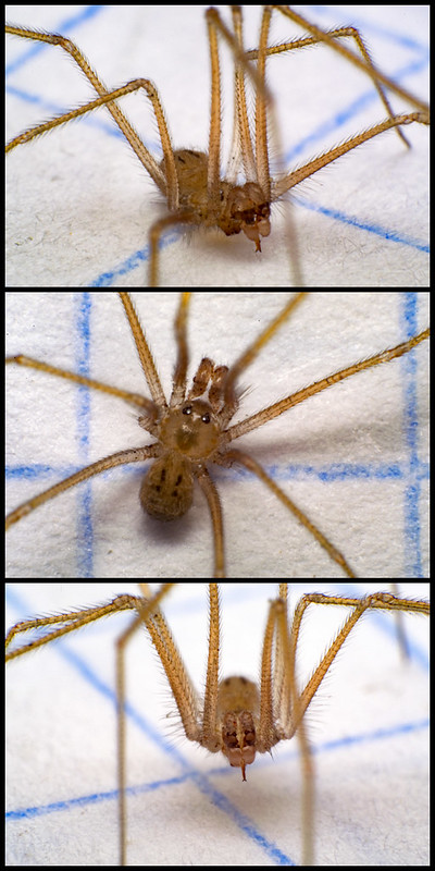 Macro Little Spider
