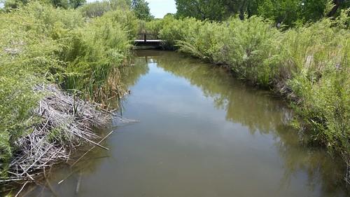 Buckland Ditch
