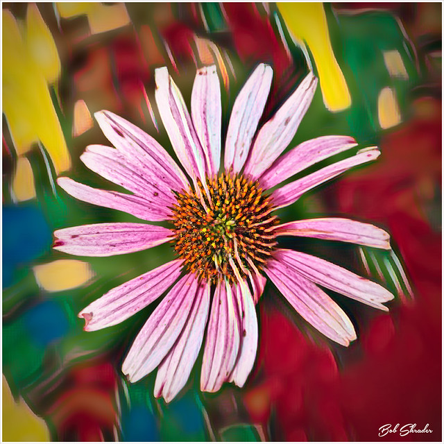 Coneflower Art