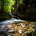 Light Trails & Wood Fall
