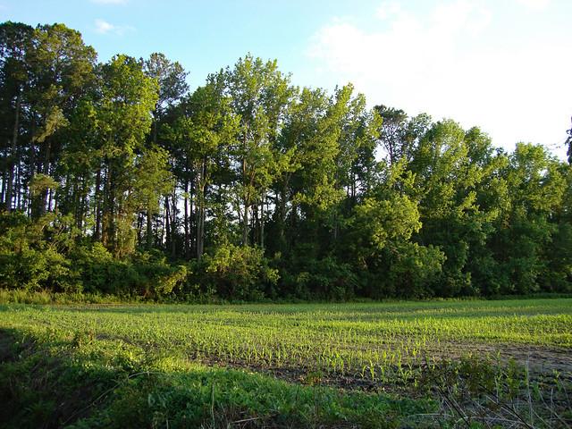 Freshly Planted Field.